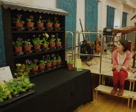 Drointon Nurseries Auricula Theatre at The Auricula Suite Concert