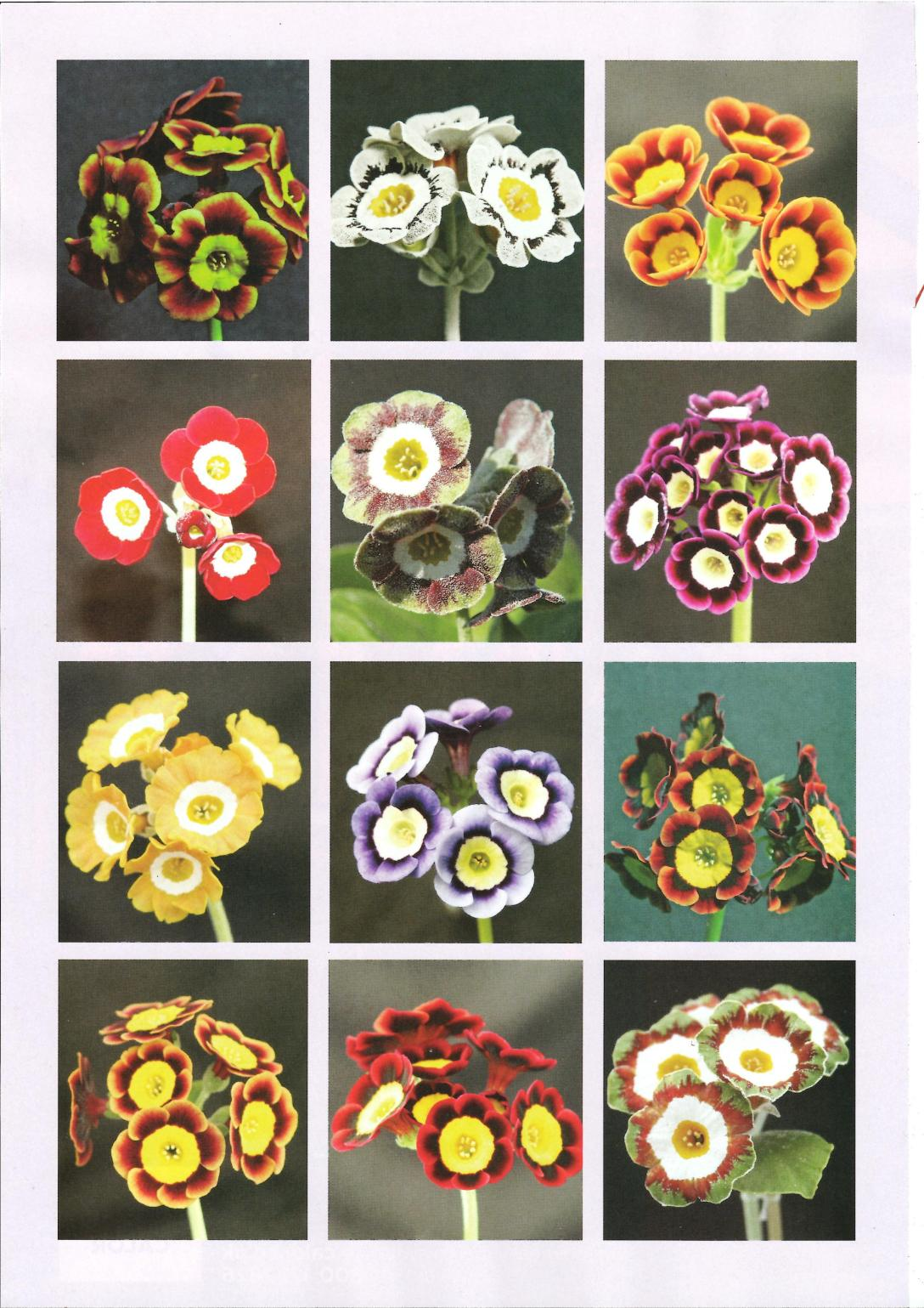 Northern Echo - Living magazine p3 flowers