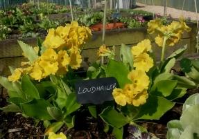 Loudhailer by Drointon